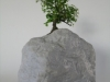 Cheap Bonsai