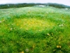 Fairy Ring with Dandelions